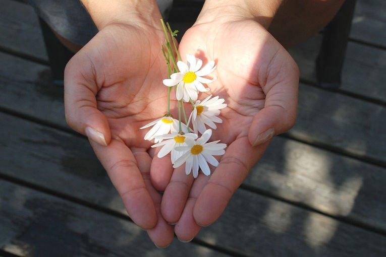 gaensebluemchen werden ueberreicht
