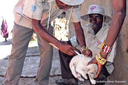 Welpe wird geimpft gegen Tollwut